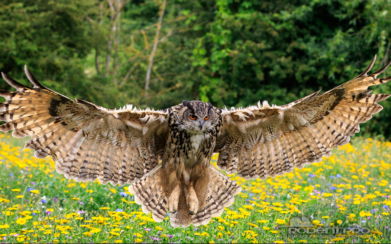 Ten Of The Largest Birds Of Prey In The World